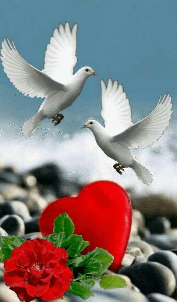 Красиві поздоровлення коханій в прозі